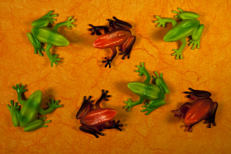 Seven Frogs