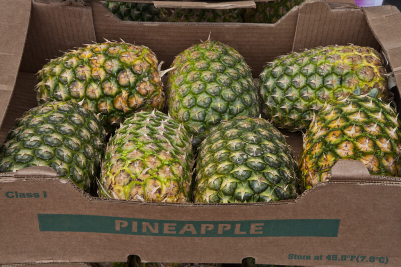 Seven Pineapples on Display at Haymarket Square
