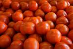 Several Medium-Sized Vine Ripe Tomatoes