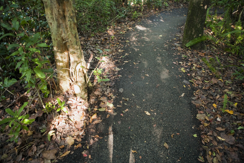 Shaded Asphalt of Gumbo Limbo Trail