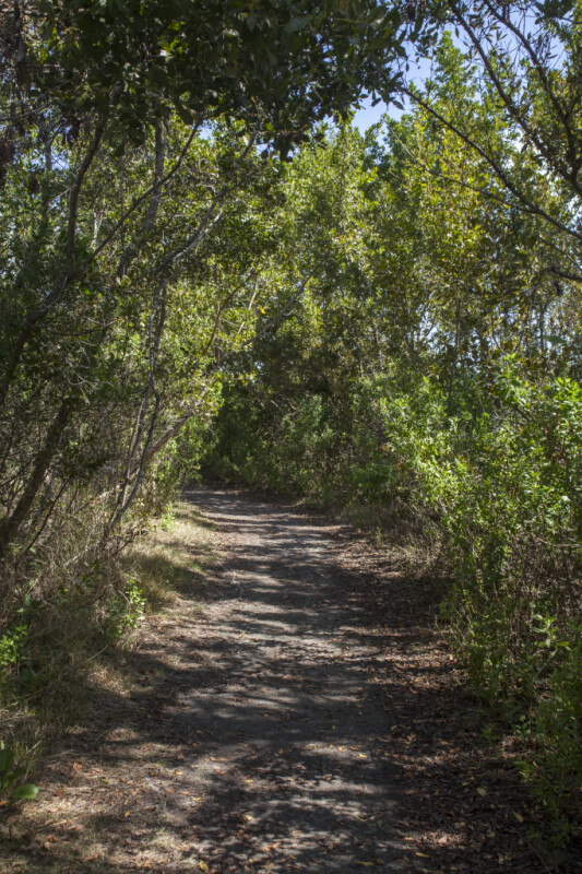 Shaded Path Leading Through Trees and Shrubs at Biscayne National Park