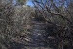 Shaded Trail Amongst Dry Shrubs