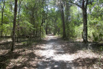 Shaded Trail at Chinsegut Wildlife and Environmental Area