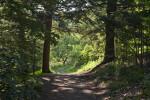Shaded Trail