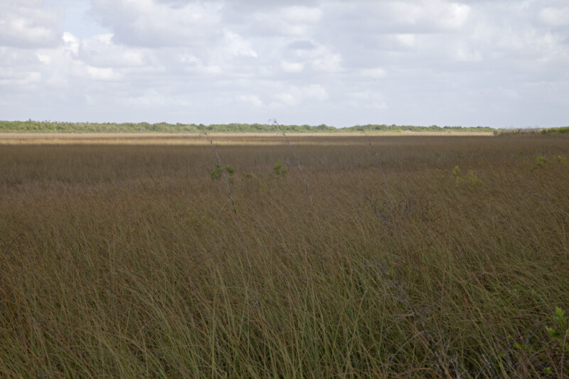Shadowed Sawgrass Prairie