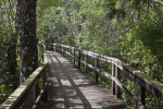 Shadows Casted Upon the Big Cypress Bend Boardwalk
