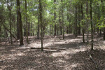 Shadows on Leaf-Covered Ground at Chinsegut Wildlife and Environmental Area