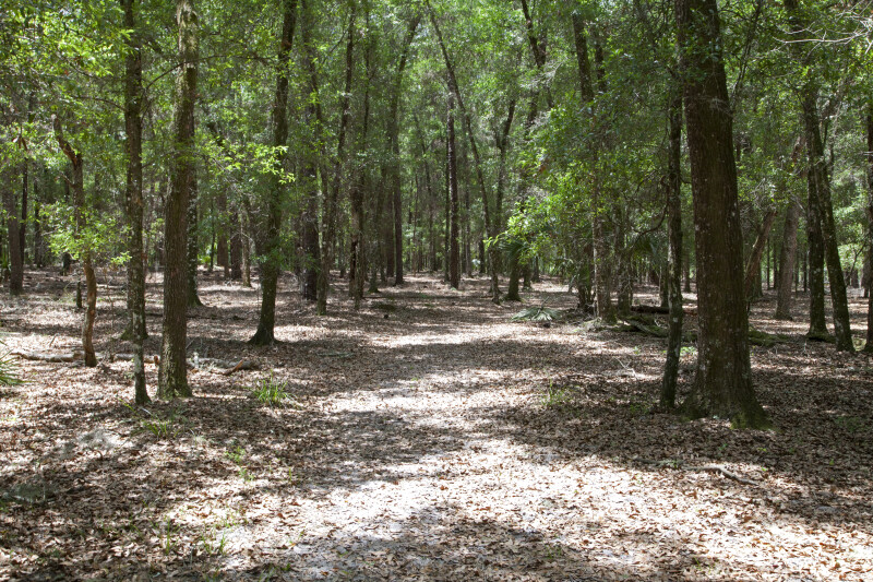 Shadowy Path Through Trees at Chinsegut Wildlife and Environmental Area