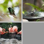 Shaking/Ruffling Feathers photographs