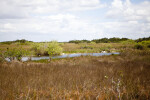 Shark Valley of Everglades National Park
