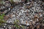 Shell Mound