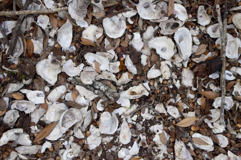 Shell Mound Close Up