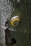 Shell of a Grove Snail