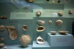 Ancient Mollusc Shells