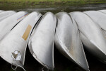 Shiny Metal Canoes at Myakka River State Park