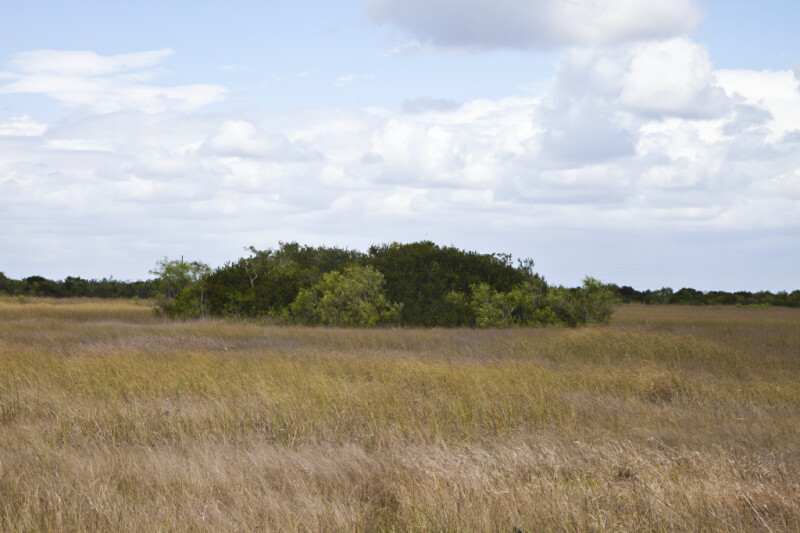 Shrubs and Trees Amongst a Field of Sawgrass