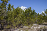 Shrubs and Trees at Biscayne National Park