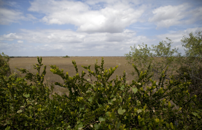 Shrubs with a Prairie in the Background
