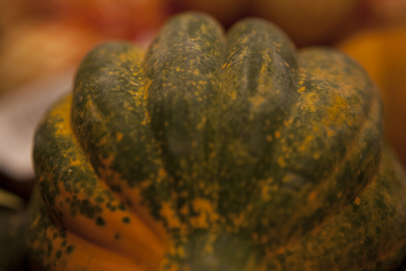 Side View of Carnival Squash