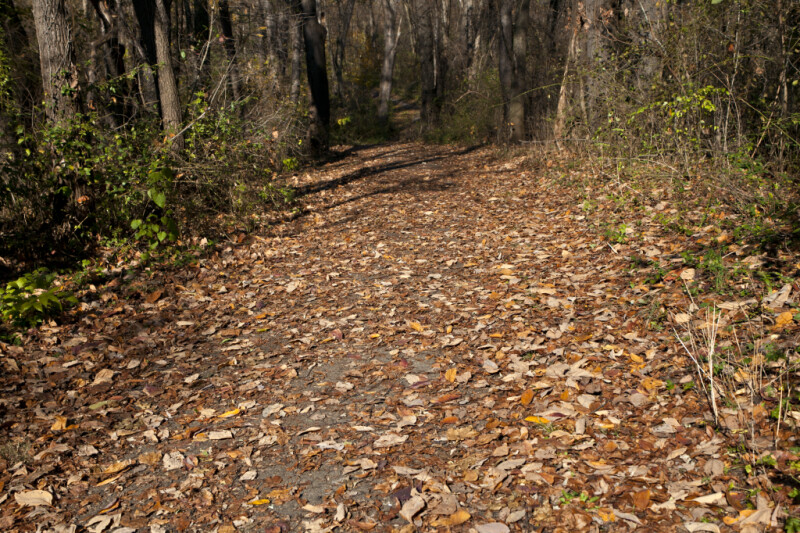 Sidewalk Covered by Leaves at Evergreen Park