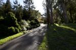 Sidewalk Running Through Coniferous Plants & Tall Trees