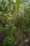 Sign Amongst Vegetation along Gumbo Limbo Trail