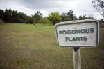 Sign for Poisonous Plants