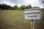 Sign for Poisonous Plants