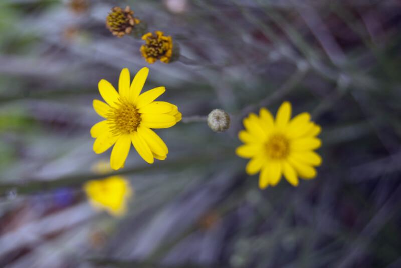 Silkgrass Flower Detail
