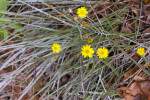 Silkgrass with Flowers