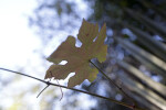 Single Leaf with Many Lobes