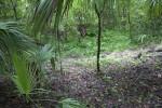 Sinkhole at the Kanapaha Botanical Gardens