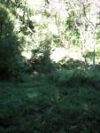 Sinkhole Grass