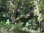 Sinkhole Ravine