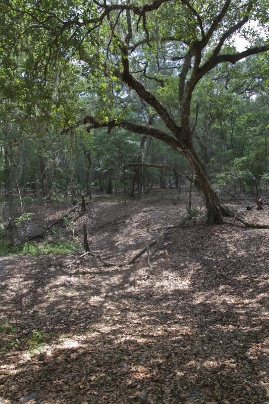 Sinkhole Rim at Chinsegut WEA