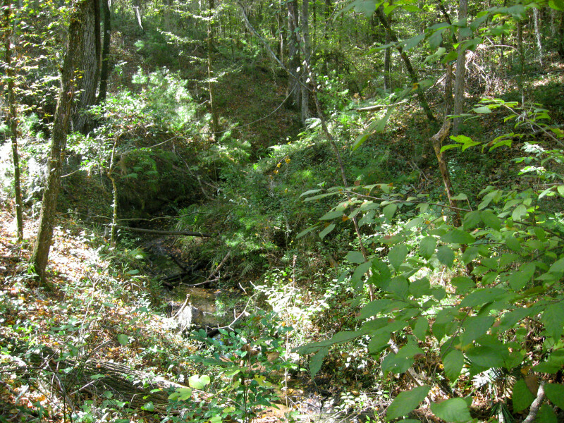 Sinkhole Stream