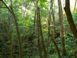 Sinkhole Vegetation