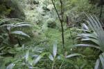 Sinkhole with Dense Vegetation at the Kanapaha Botanical Gardens