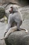 Sitting Primate