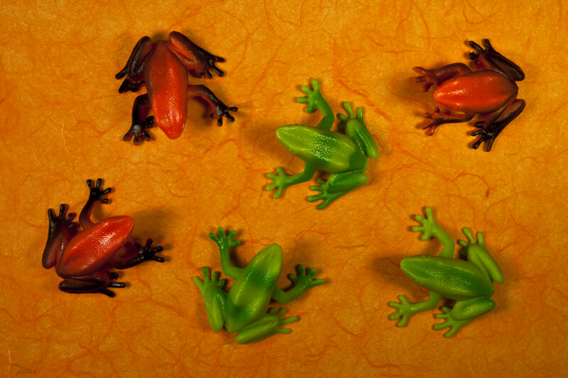 Six Frogs