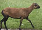 Slender Mammal