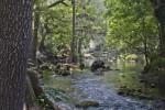 Slight Rapids on the Hillsborough River at Hillsborough River State Park