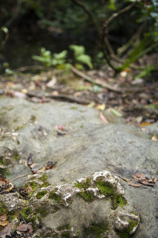 Small Amount of Moss Growing in Crevices of Rock