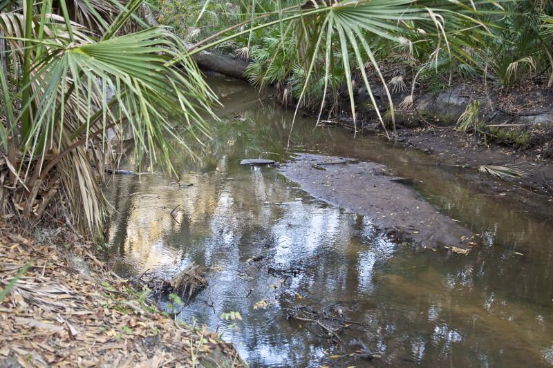 Small Creek at Oscar Scherer