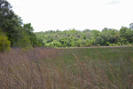 Small Field Beyond Prairie Grass