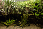 Small Fish in Freshwater Aquarium