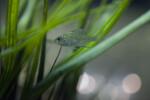 Small Fish Hiding in Grass