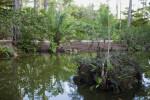 Small Island at the Morikami