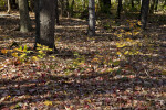 Small Maple Plants and Numerous Fallen Leaves at Evergreen Park