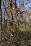 Small Maple Tree at Evergreen Park